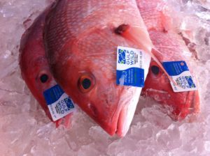 Gulf Wild Tagged Snapper