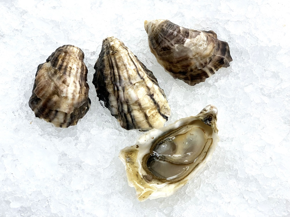 Sunset Beach Oysters